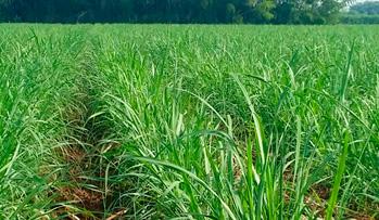 cultivos-bio-crop_12cana